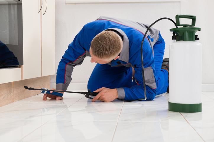 Hiring a Pest Control Service